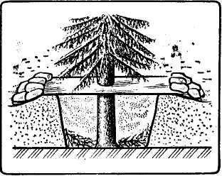 Рис. 7. Укрытие в снежной яме у ствола дерева