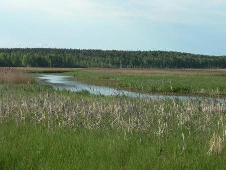 Рис. 26. Река Исеть (фото Семеновой Н.А.)