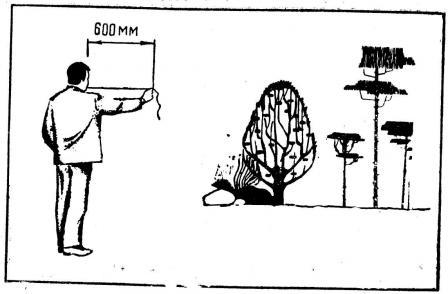 Рис. 3. Измерение длины вытянутой руки