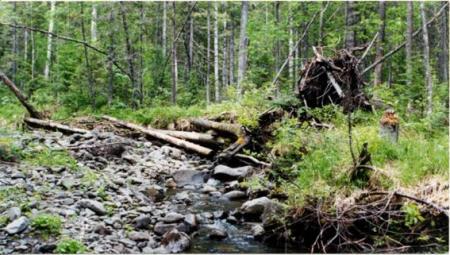 Рис. 62. Река Катышер (фото Слепухина А.В. и Бердюгиной Н.)