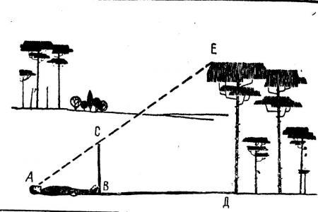 Рис. 13. Определение высоты предмета по своему росту